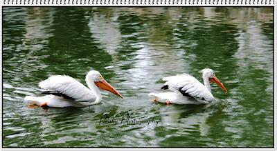 SINGAPORE BIRD PARK -JURONG-PRIYAMUDANPRABU