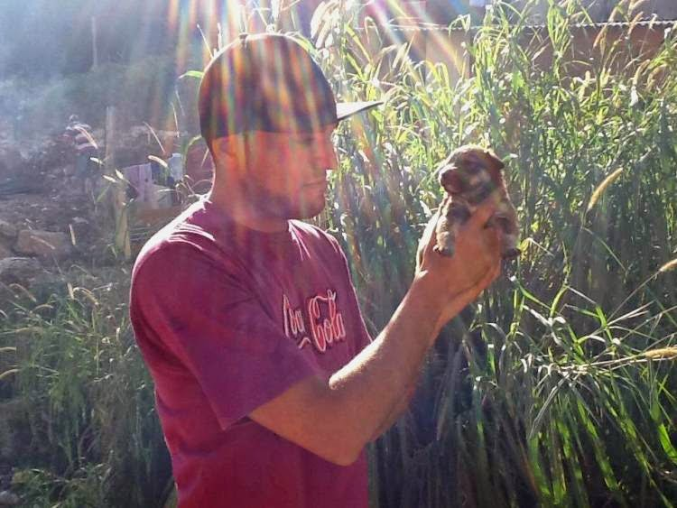 Abrigo de Marcelinho Protetor - Mais de 150 animais - cães, gatos, galos retirados de rinhas e ....