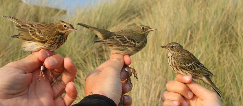 It's birding time!