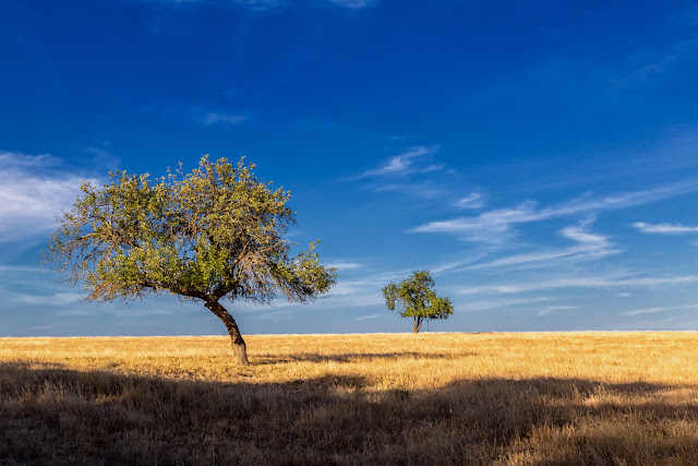 trees in paddock blue sky