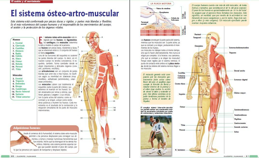 Único Anatomía Y Fisiología Humana Marieb 9ª Edición Descarga Cresta ...
