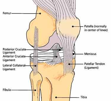 good problem: Post Cruciate Ligament
