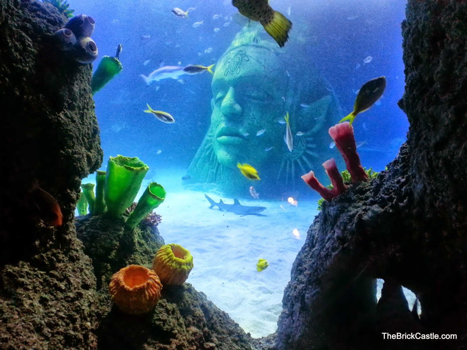 SeaLife Manchester giant stone head inside main tank