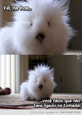véi na boa coelho ou gato, velho na boa meme, vei na boua meme, véi na boa levei um choque, foto muito engraçada coelho arrepiado, foto engraçada de cachorro arepiado, choque, funny pictures, fun picture, animals, rabbit, meme