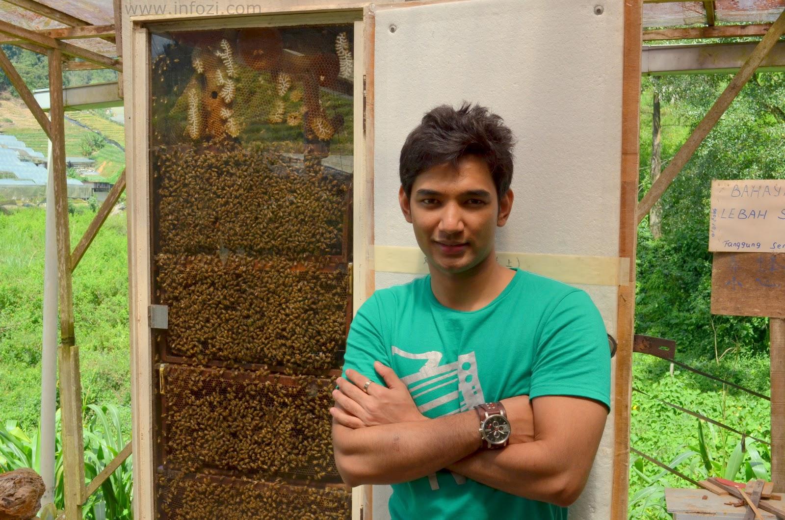 ladang lebah