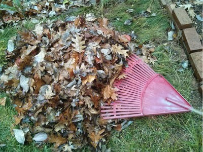 pile of leaves with a rake