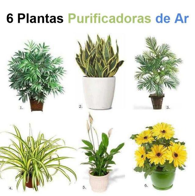 Plantas que melhoram o ar