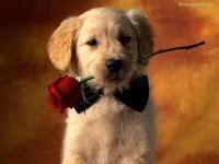 Perrito con una rosa