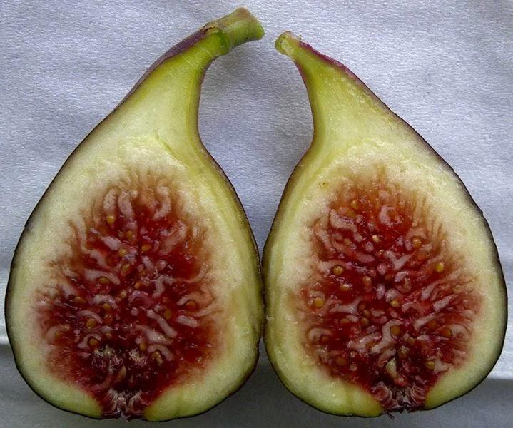 Black Bethlehem Figs
