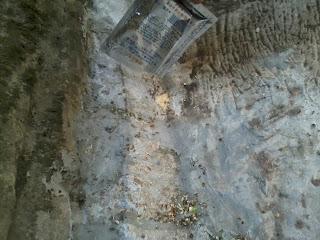 membasmi semut dengan alami, cara mengusir semut, menghalau  semut
