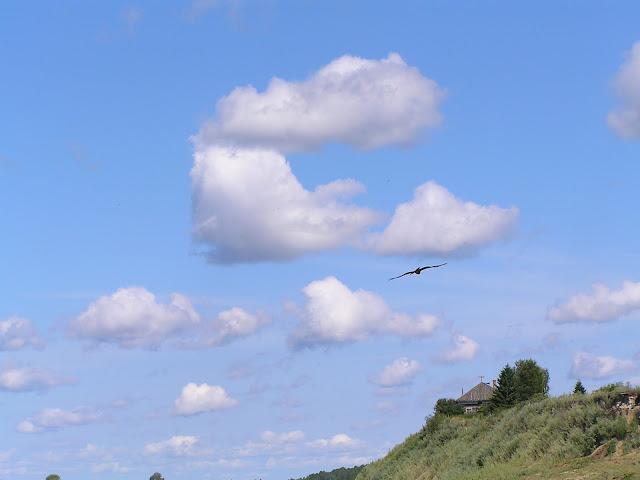 облака как птицы - летают