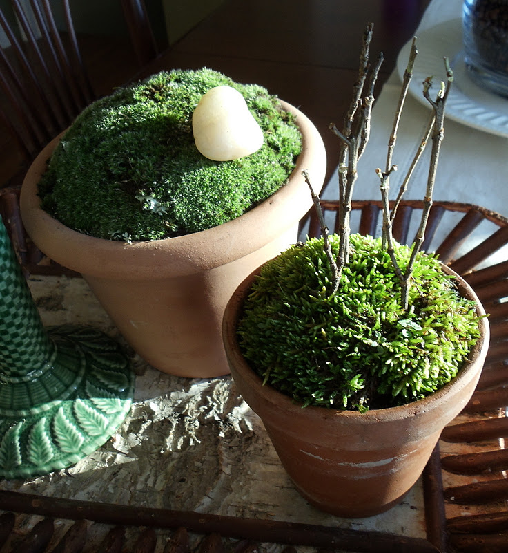 Upstairs downstairs pots of moss for Clay potting soil
