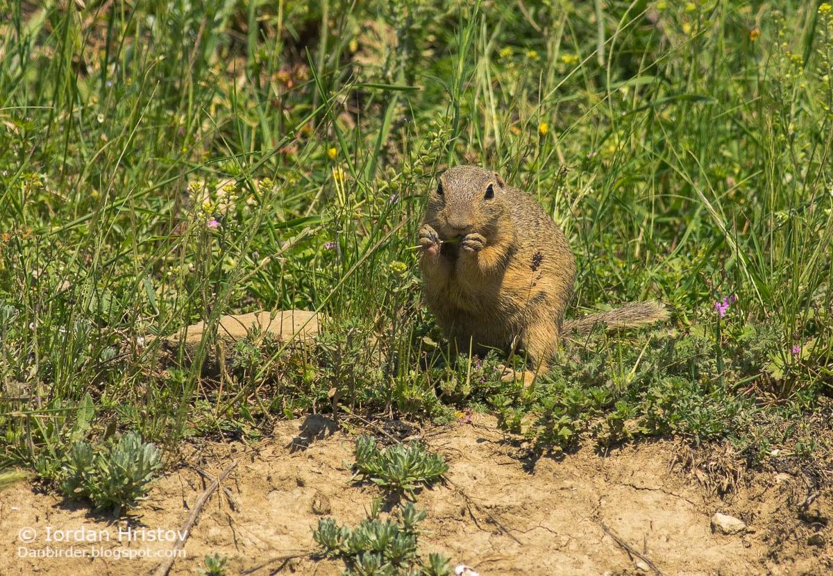 mammal photography in Bulgaria