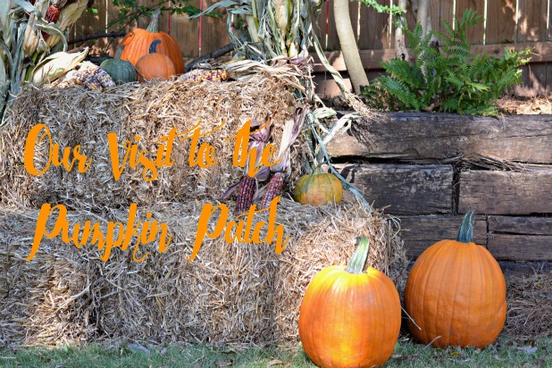 Cover photo Cordier Events Pumpkin Patch