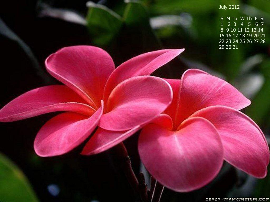 http://3.bp.blogspot.com/-k_gRXsf-bBY/TuAqwcuD36I/AAAAAAAAFVA/EAI6T0X7cGQ/s1600/7.jpg