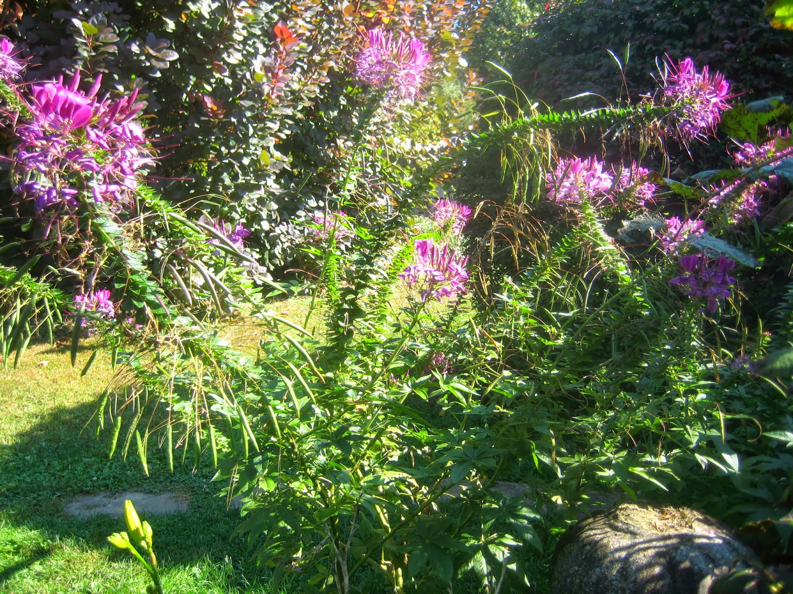 Meadow Muffin Gardens Drought Resistant & Attracts Hummingbirds Plant S