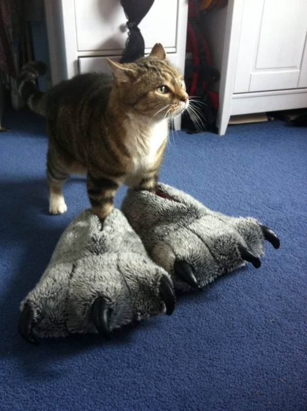Funny cats - part 64 (35 pics + 10 gifs), funny pics of cats, cats pics, funny pictures, funny cats