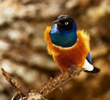 canto como uma ave, numa ilusão de paz