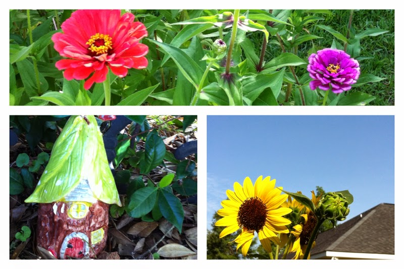 zinnia, fairy house, sunflowers