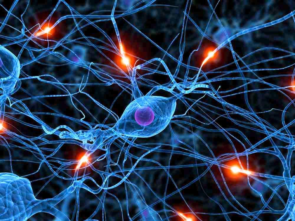 Human body nerves