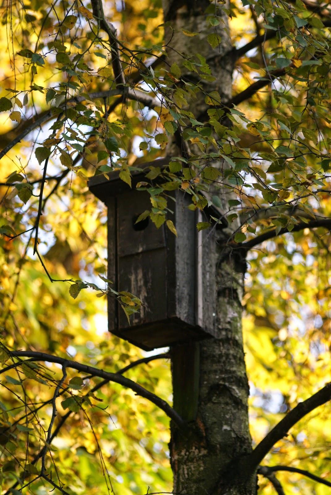 budka dla ptaków bird house autumn