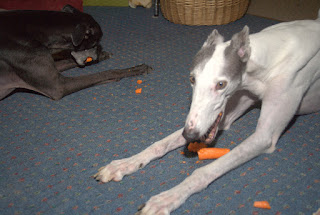 Blue and Bettina greyhounds love carrots III
