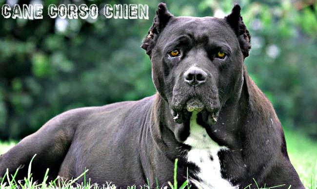 Photos des chiens les plus dangereux du monde Best Nikon Lenses for Wildlife Photography - Photography Life