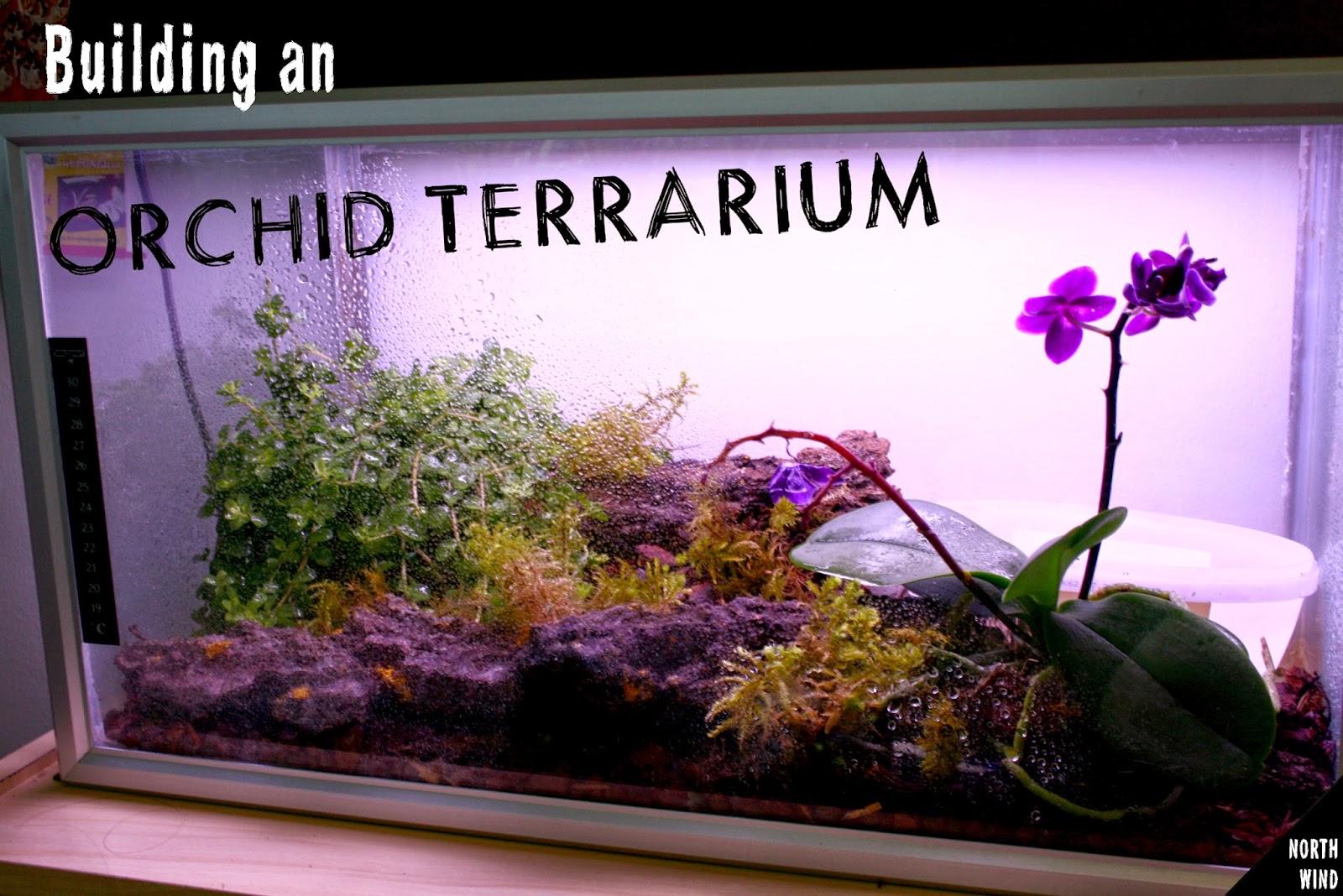 Orchid Terrarium North Wind