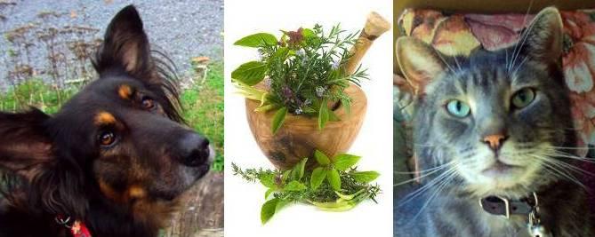Natural Antibiotics For Dogs Uk