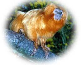 Consulte a lista de animais ameaçados de extinção