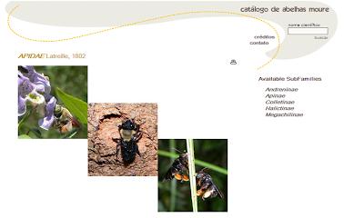 http://moure.cria.org.br/catalogue