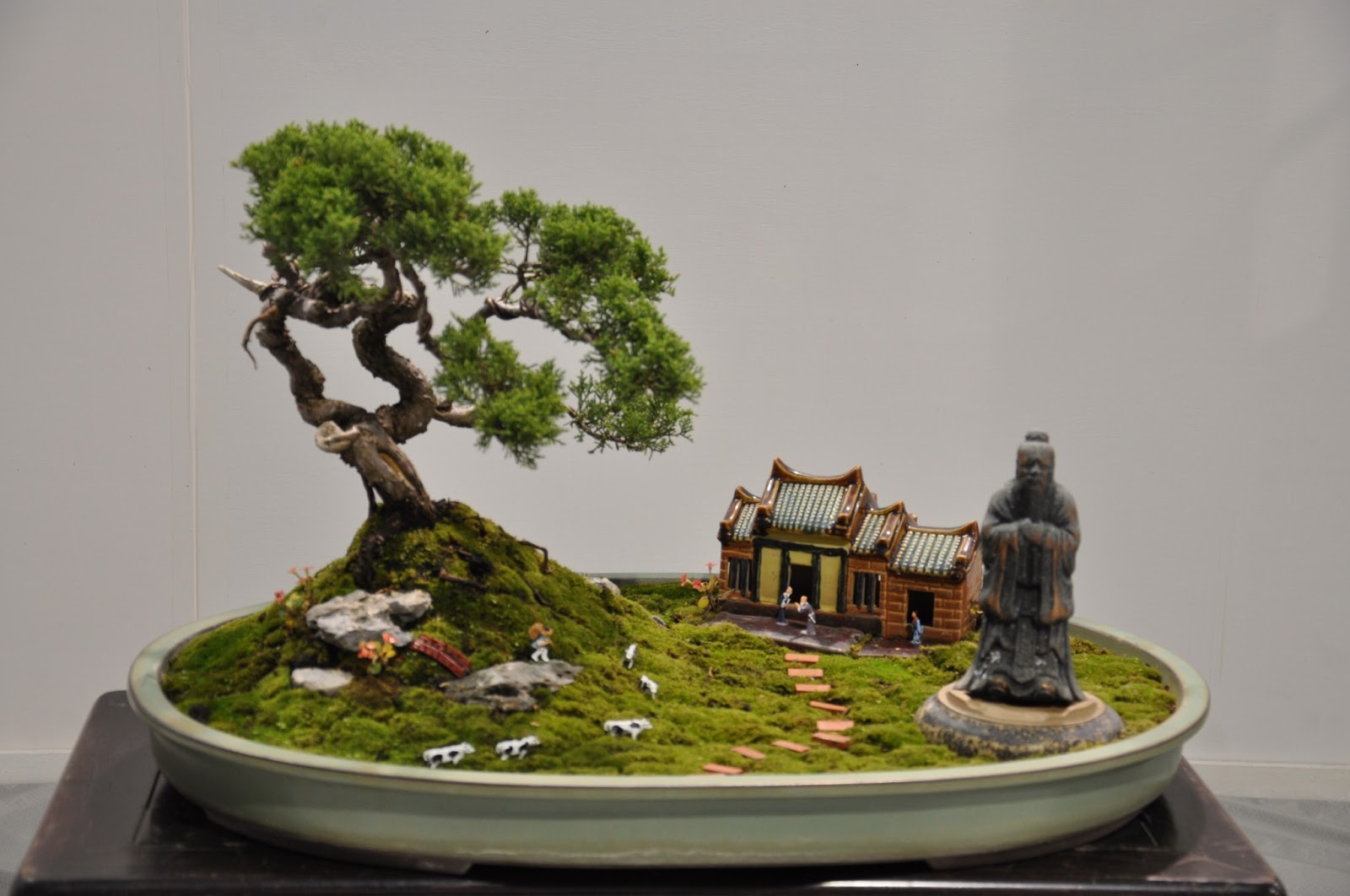 All In One Bonsai And Ceramics January 2013