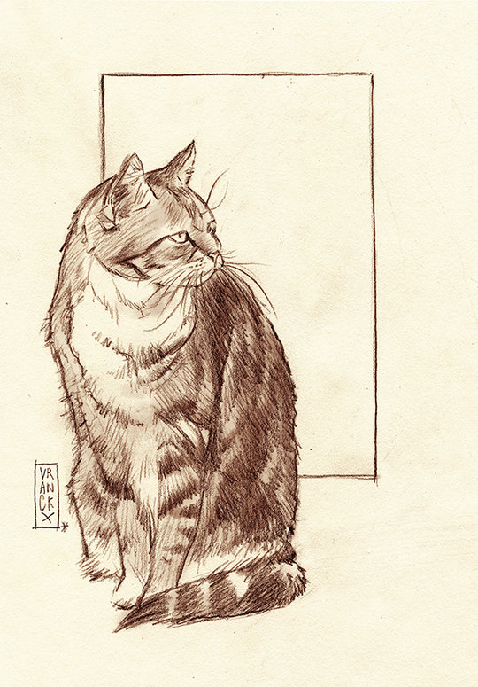tabby cat illustration
