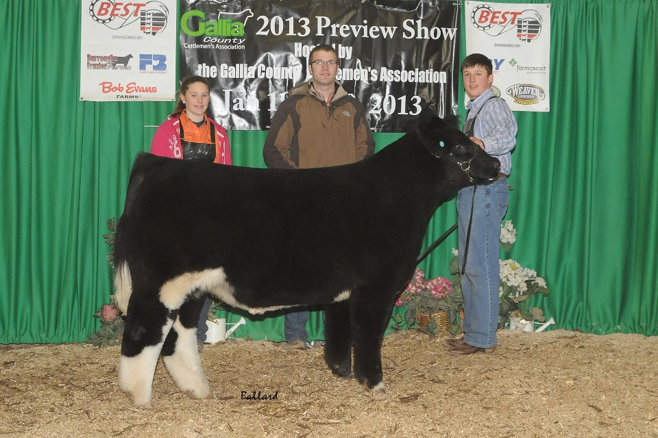 2013 gallia county preview show day 2 5th overall market animal day 1