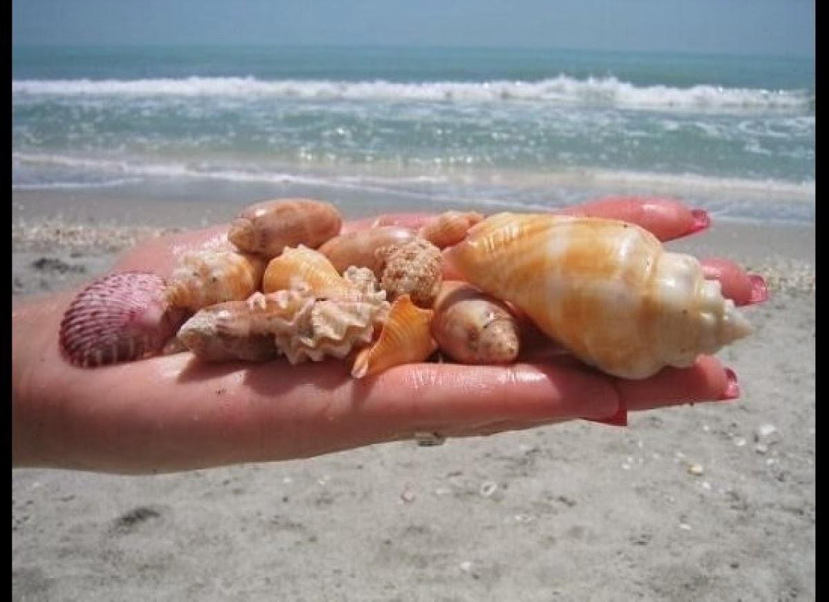 Best Shelling Spots On Sanibel Island