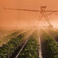 Patatas bajo riego Pivot en Argentina