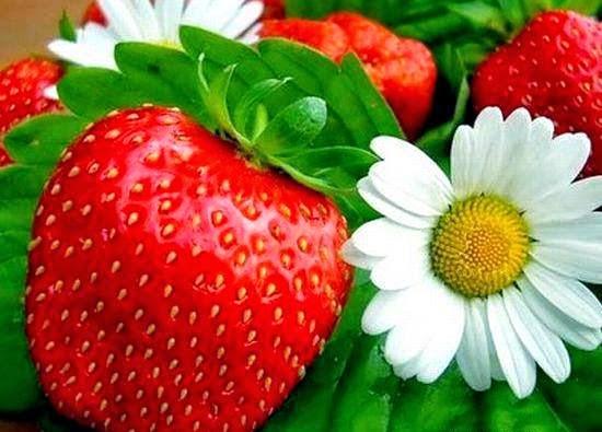 Kategori Relaks Minda - Bunga Dan Buah