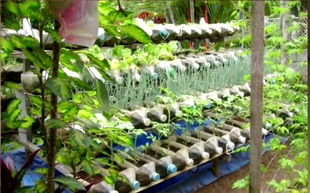 Make a Garden using Old Plastic Bottles