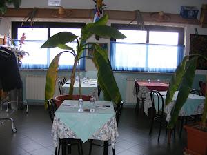 Sabor Tropical cucina venezuelana