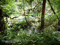 Shannon Hager Photography, Hoh Rainforest