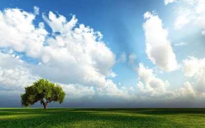 Beautiful green tree blue sky landscape Pc hd nature wallpapers