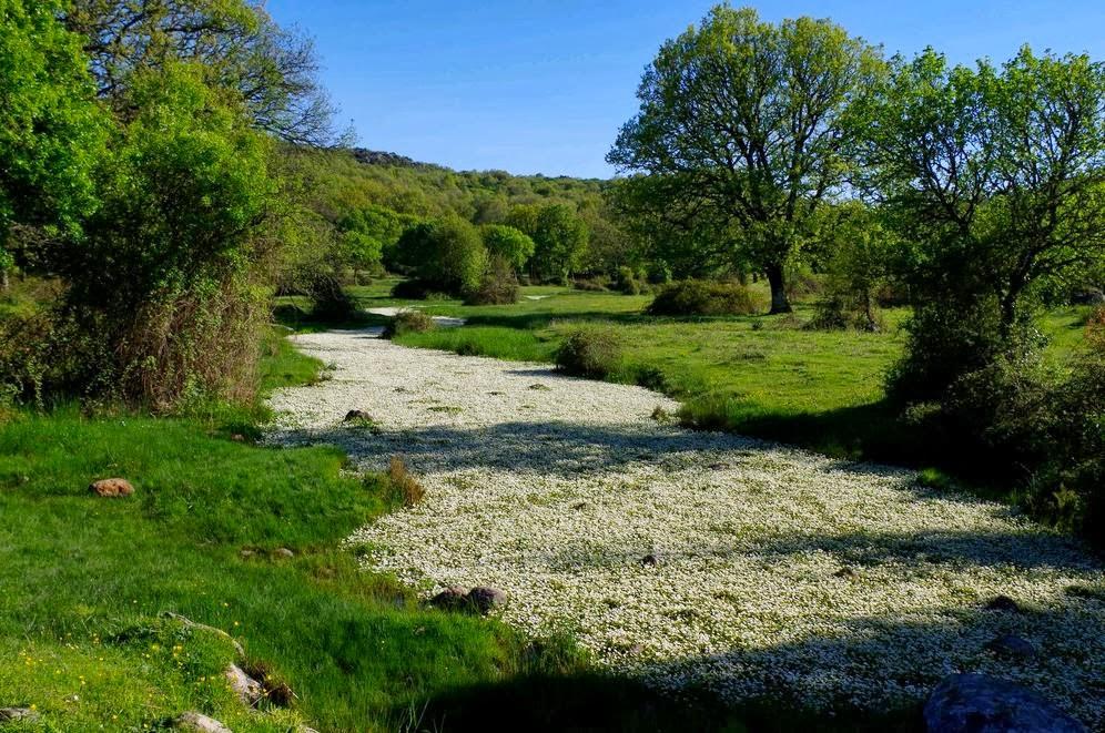 Chi viaggia impara immagini dal mondo italia sardegna - Letto di un fiume ...