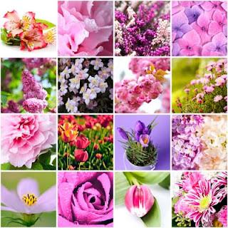 16 fotos de flores de colores