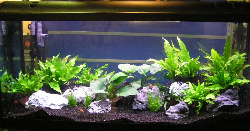 My Fresh Water Aquarium - Natural Planted Tank (Walstad Method ...
