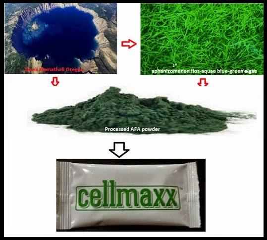 apa itu cellmaxx, cellmaxx berasal dari afa, lumut hijau biru, penyakit degeneratif, cellmaxx maxxima, maxxima, maxxima cellmaxx