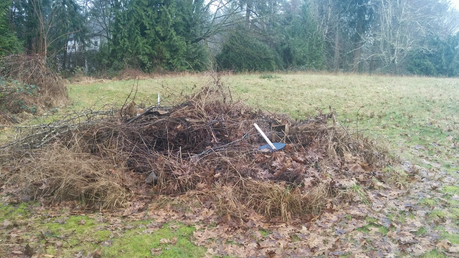 An unused burn pile that will contribute to the cores of my garden beds.
