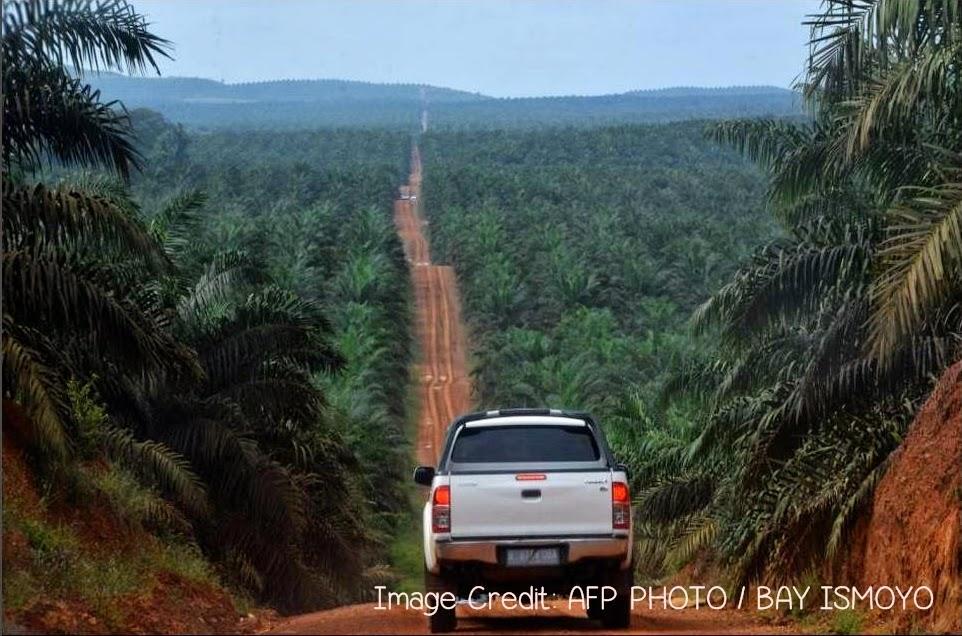 Pembalakan Hutan Kalimantan demi Kebun Monokultur