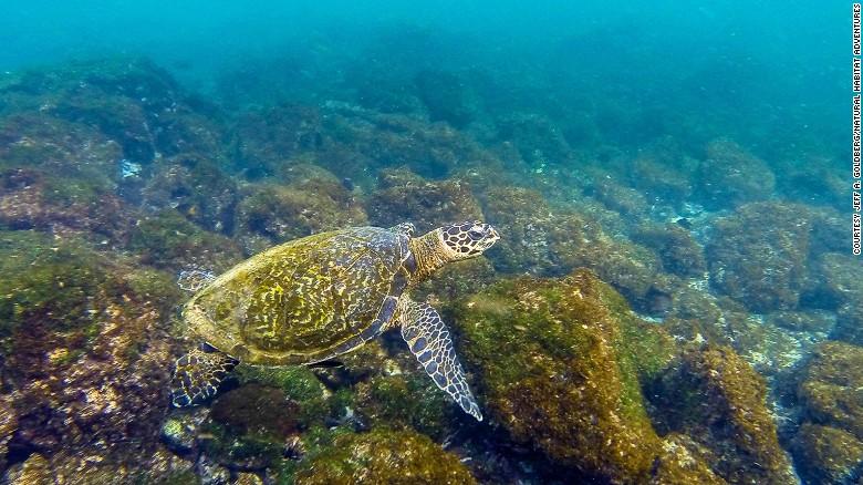 The Galapagos Islands (Ecuador)
