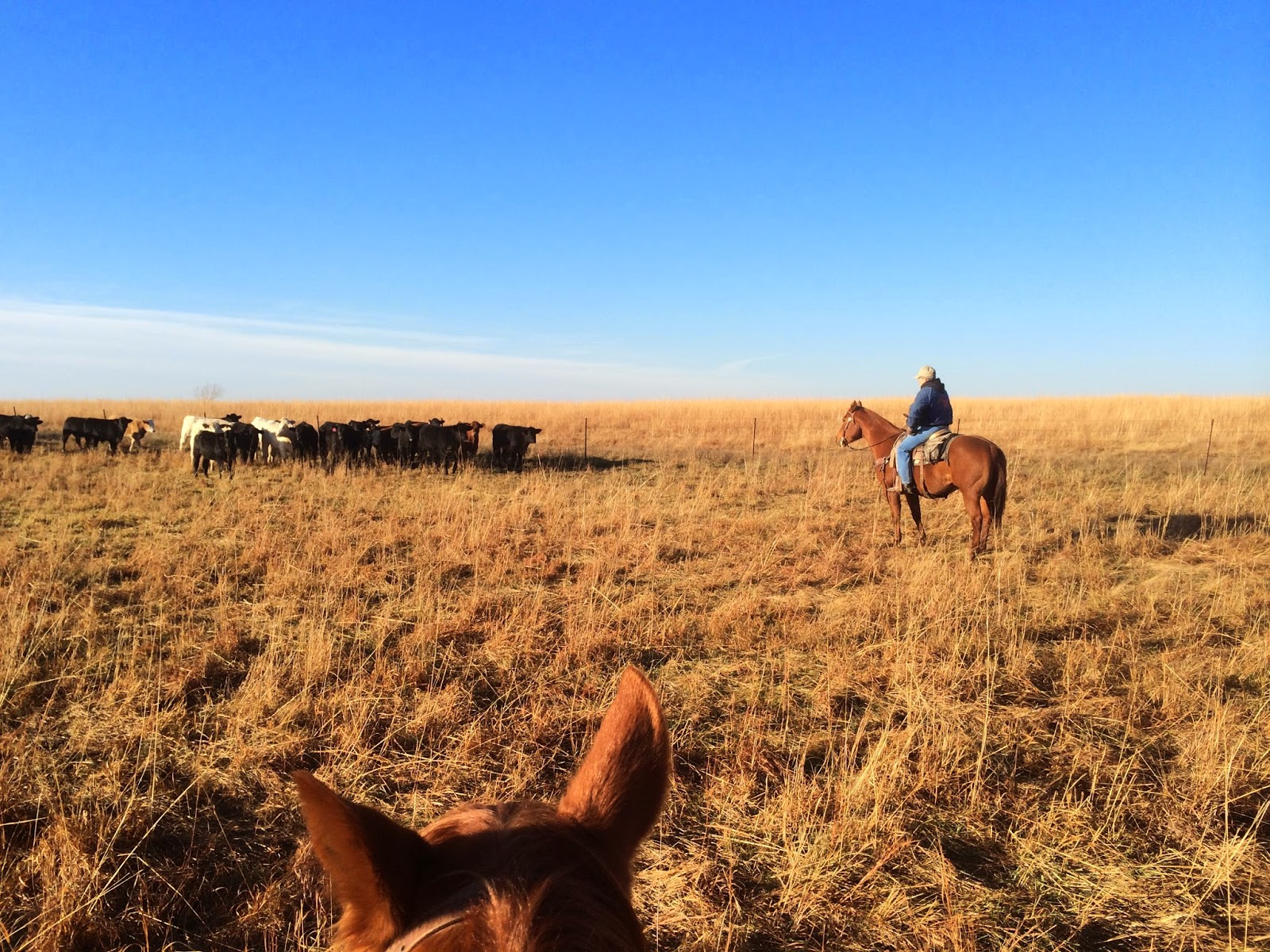 Rodeo and ranching are important components of my life