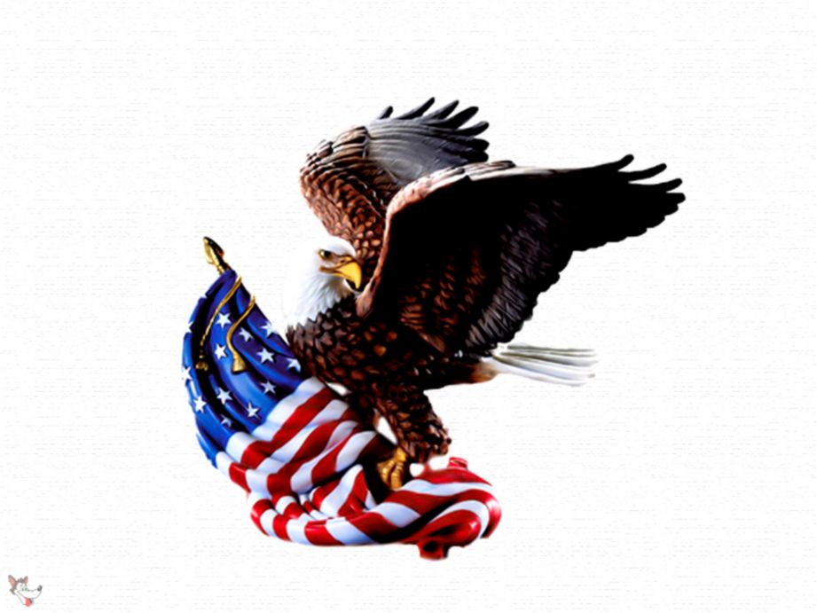 Eagle Usa High Quality Wallpaper